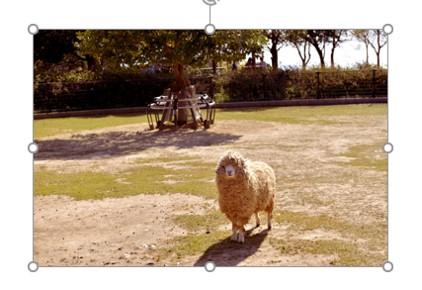 パワポで写真の一部にぼかしをかける方法3
