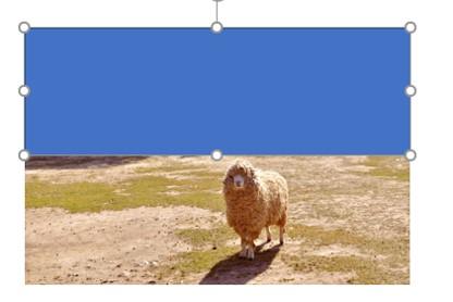 パワポで写真の一部にぼかしをかける方法6