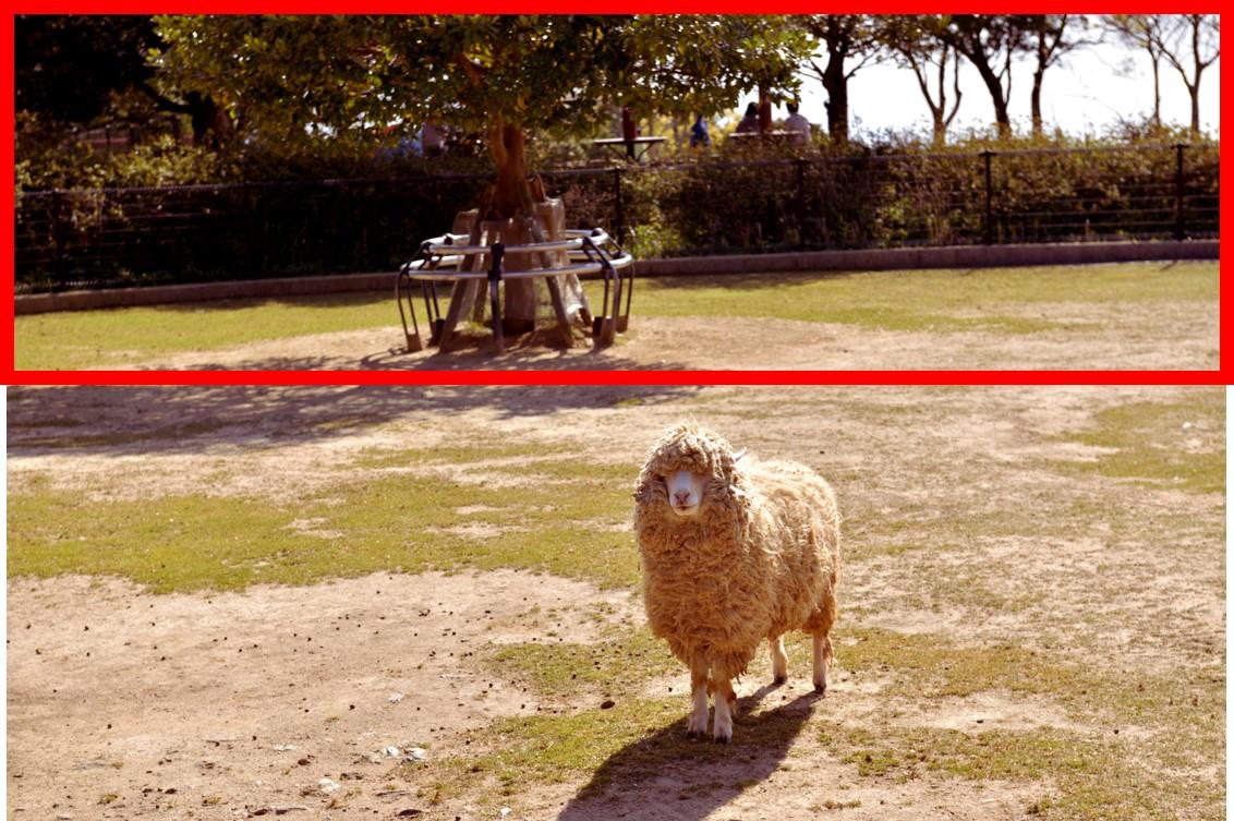 パワポで写真の一部にぼかしをかける方法1